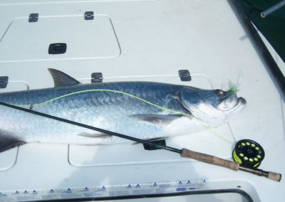 clearwater-charter-fshing19