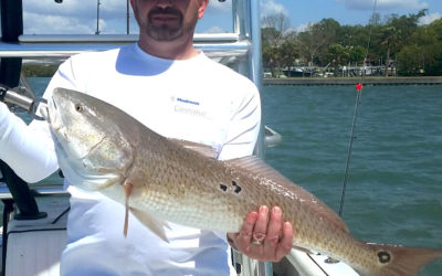 What fish are biting in the Clearwater area in fall 2017