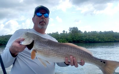 Snook, Redfish & more tips for Clearwater fishing in late July/ early August