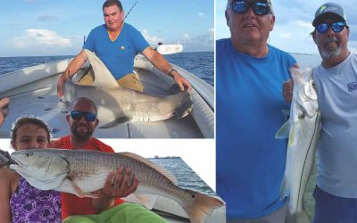 Warmer waters making tarpon, snook, redfish, trout and shark fishing great in Tampa, Clearwater & Tarpon Springs.