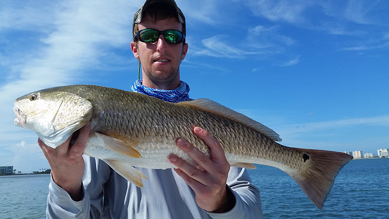 Fishing tips for Clearwater to the Tampa Bay:  Reds, Tarpon, Snook & more are changing their patterns