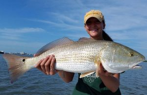 Redfish caught during spring in Clearwater Fl