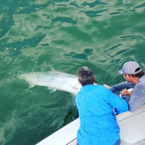 Tarpon Fishing - Clearwater