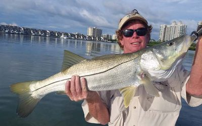 Where to Hook Snook, Reds, Tarpon & Sharks in Clearwater Right Now